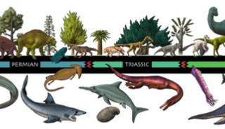 GMNH Evolutionary Timeline