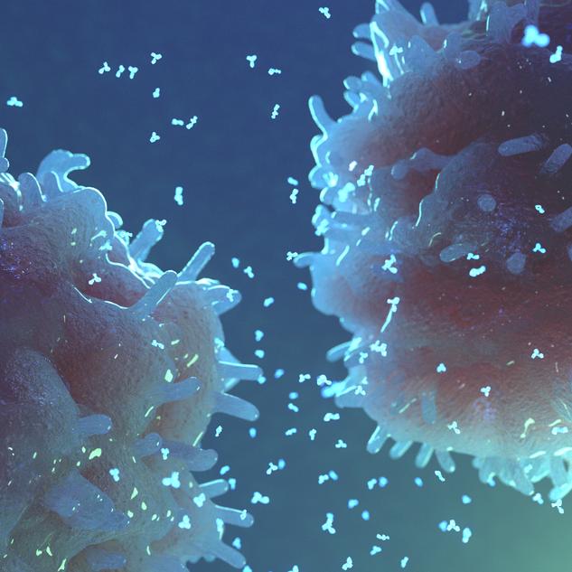 B-Lymphocytes Producing Antibodies