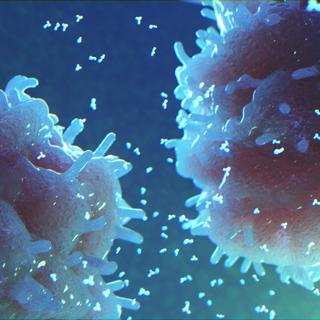 Antibody Production