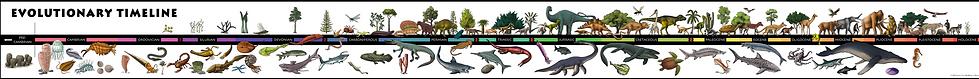 Evolutionary Timeline   Color and Tonal.