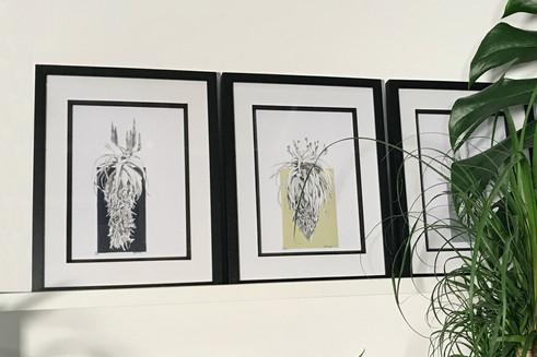 Aloe's et al.jpg