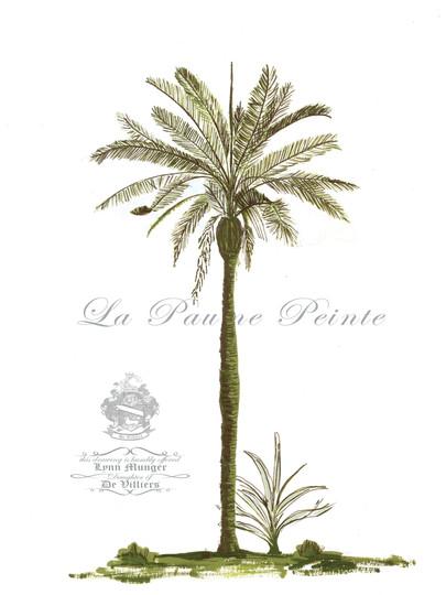 Betel Palm Classic.jpg