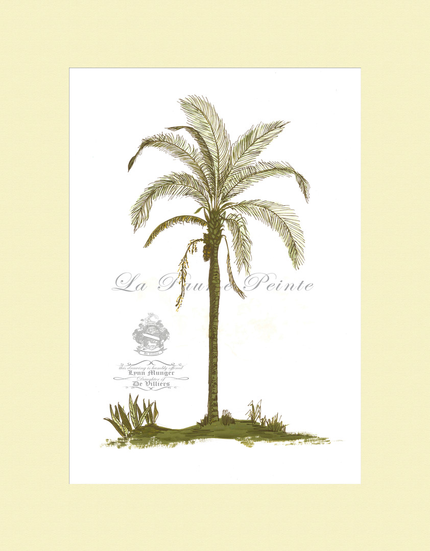Classical Palm Andean Palm