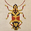 Thumbnail: Embroidered Beetle Cushion Cover - Gold   Supplied as a cover only