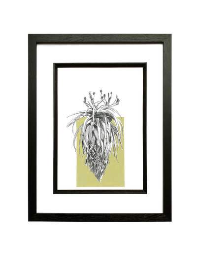 Sunbird Aloe