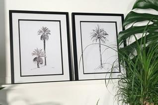 Desert and King Palms.jpg