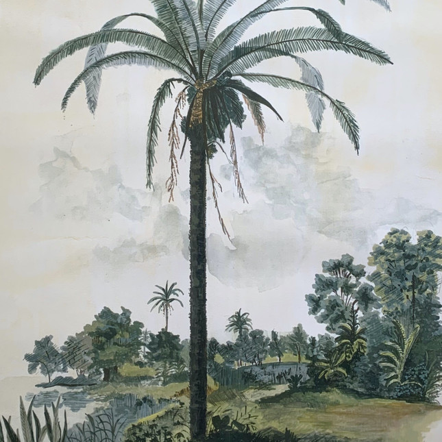 Scenic Palm Pannala Palm Close-up.jpg