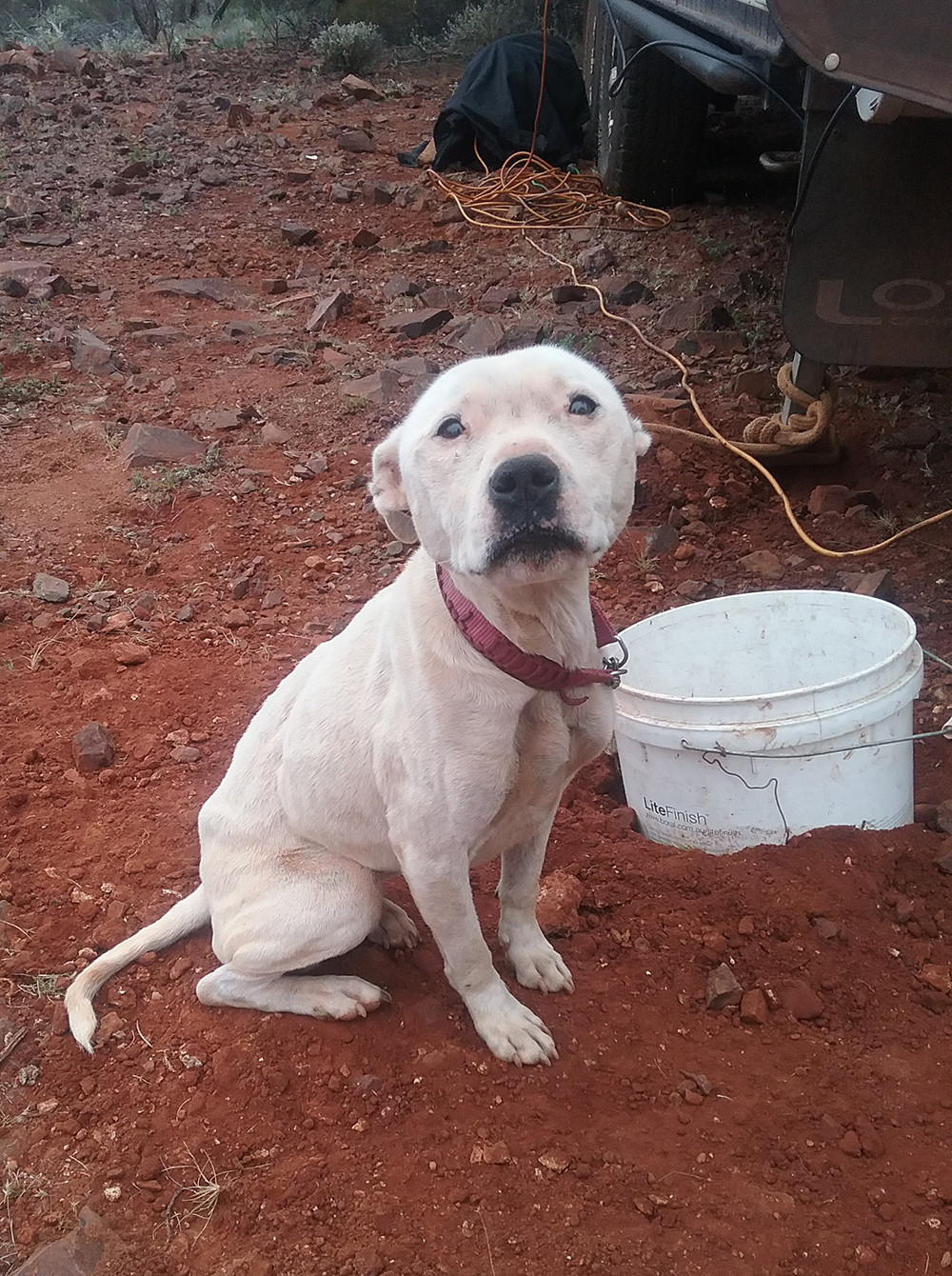Photo of Bella the day she was found