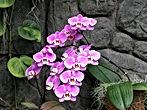 Duke Orchids.JPG