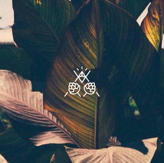 Aplicación de logotipo // Alkimia