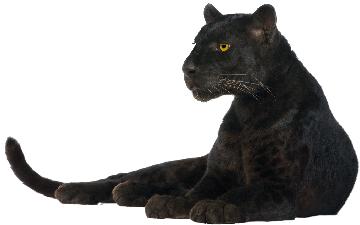 panther-png-panther-png-image-png-image-