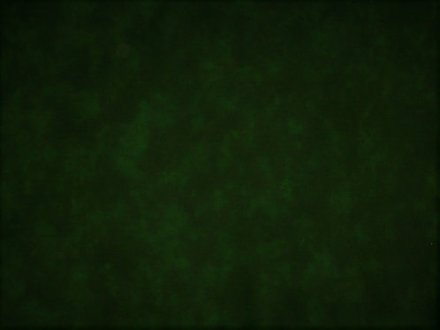 Moda Marbles Patrick Lose Real Green 2 Yards