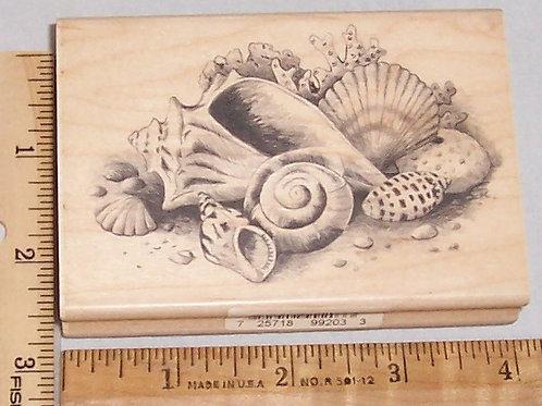 Wood Mounted Rubber Stamp Inkadinkado Sea Shells
