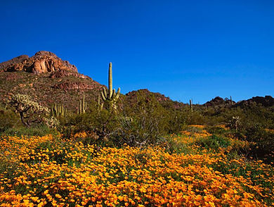 Protected land in Sonoran Desert