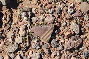 Cultural artifacts found in Sonoran Desert