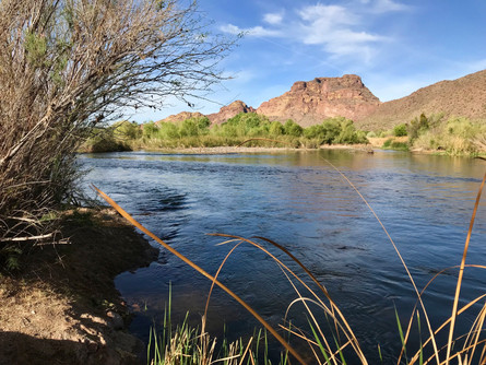 Water:  The Lifeblood of the Sonoran Desert
