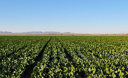 The Farmland Protection Policy Act is Waived for Border Wall