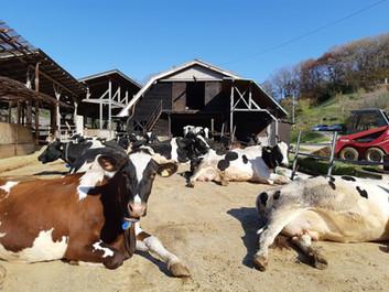 チーズハウスヤルゴイの臨時休業とチーズショップの営業継続について
