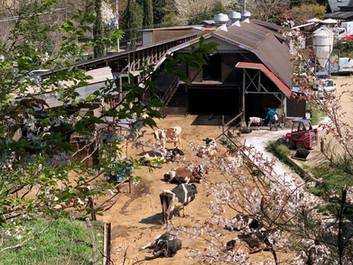 弓削牧場のコロナウィルス感染拡大防止対策について