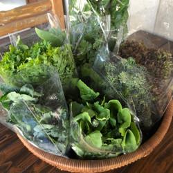 野菜とハーブ
