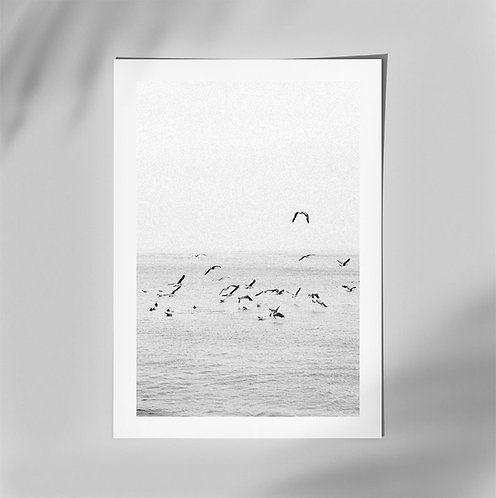 "Photo print signed - ""Birds"""