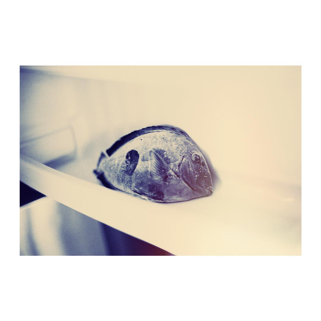 Fish_TestOptima_LR.jpg