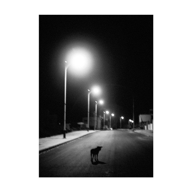 DoggyDark_Colors_Imsouane_Morocco_1119_K