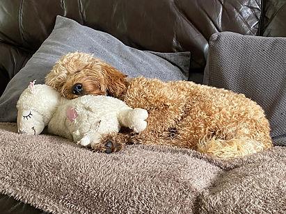 Teddy with Teddy.jpeg