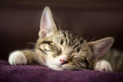Sleepy_Skittle.jpg
