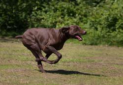 Buster at play