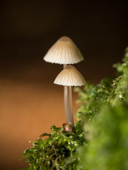 Sunlit Mushrooms