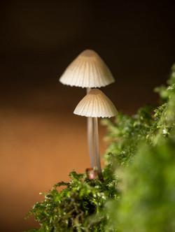 Sunlit Mushrooms