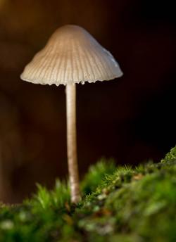 Sunlit Mushroom