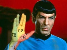 Spock Dermatomes