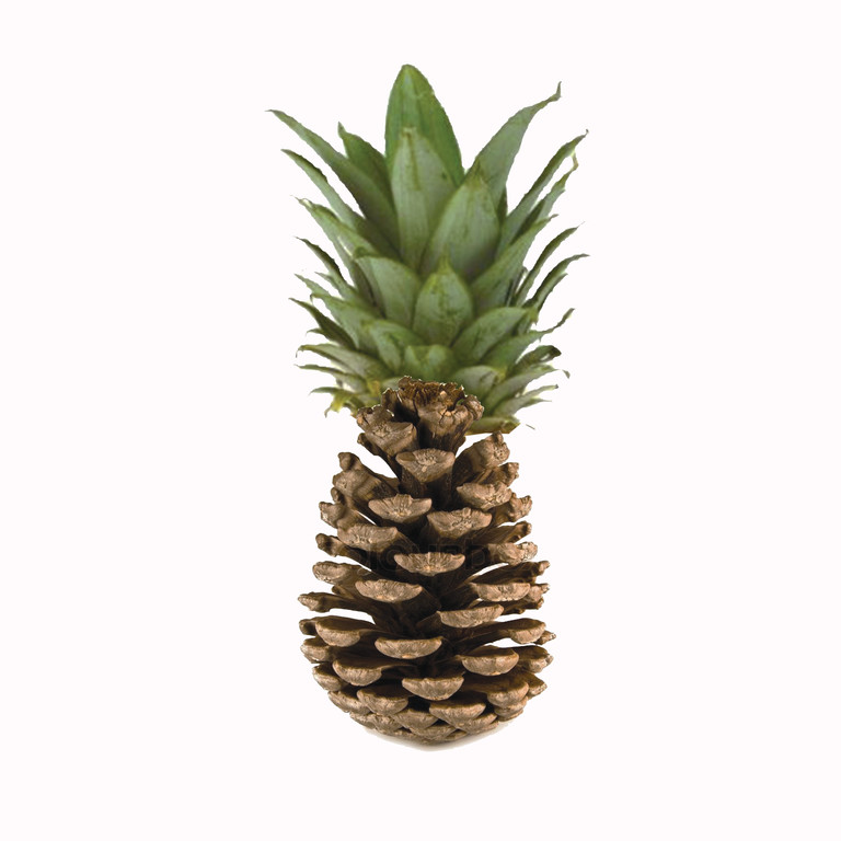 Pineapple Acorn