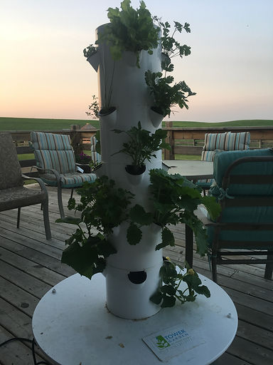 April Ockermans Tower garden 2017
