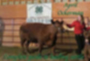 Complete guide to leading cattle.jpg