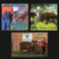 Copy of PDFS .jpg