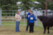 This is me in action judging at a local 4H show.