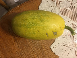 A speggetti squash grown in April Ockermans Tower garden!