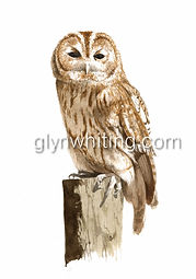 owl the sentinal for web.jpg