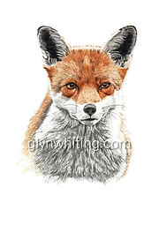 Mr Fox low for web.jpg