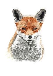 Mr Fox low for web.jpg