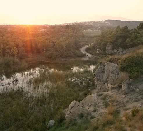 marshland in Patara