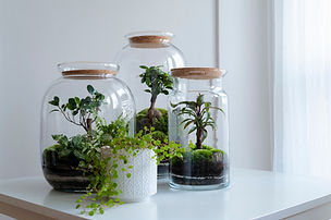 Small decoration plants in a glass bottl