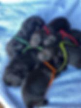 Gurly pups.jpg