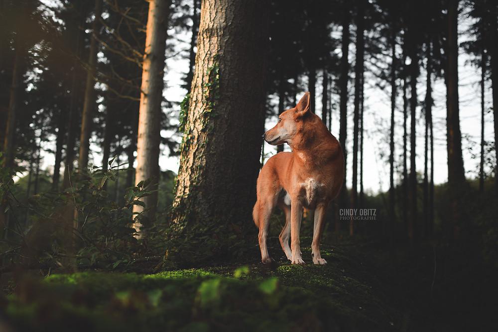 Séance photo de Lachan à la Forêt de Montmorency (95)