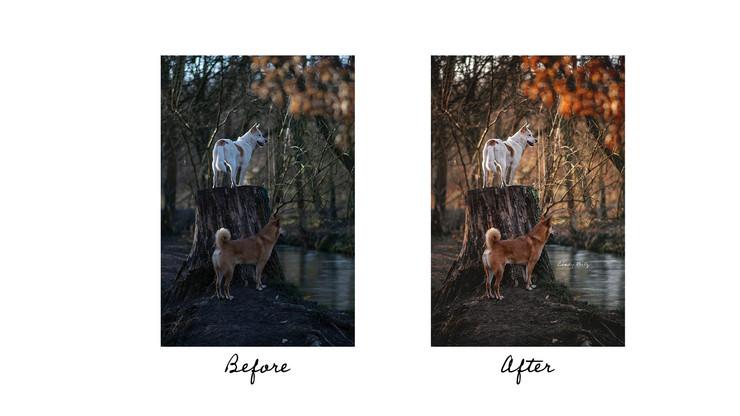 Avant/Après - Lamya & Lachan