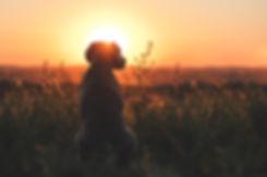 Photo au coucher de soleil