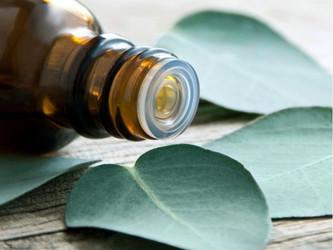 Aktywność przeciwdrobnoustrojowa olejku eterycznego z eukaliptusa (Eucalyptus citriodora) - lepszy n